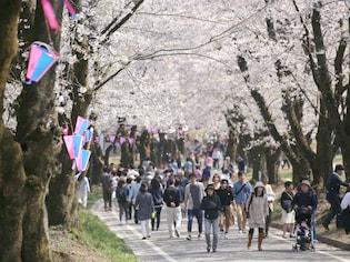 歴史好きもファミリーも楽しめる群馬の桜名所