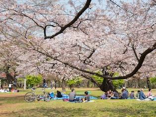アクセスが便利で、敷地も広大な「代々木公園」(渋谷区)