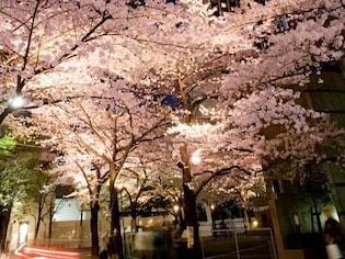 大人の夜桜デートなら六本木アークヒルズ