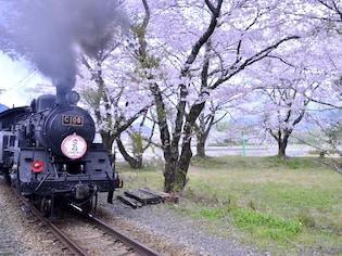 花見列車の代表格!大井川鐡道・家山の桜トンネル