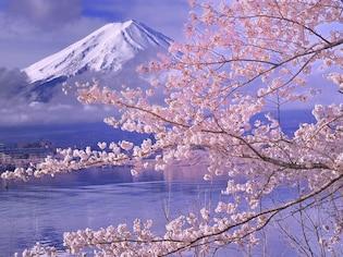 富士山と桜の競演!河口湖周辺のお花見スポット