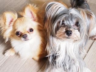 実は、犬も悩んでいるかも…ペット用床材の選び方