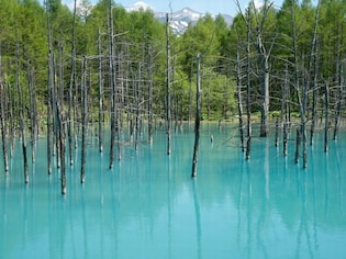 美瑛・富良野で美景観を楽しむ