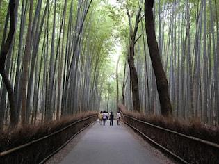 日帰りで楽しめる京都一人旅