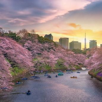 RetireJapan