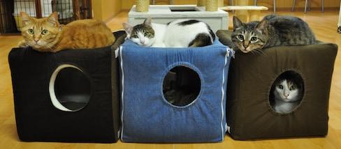 4 Purrfect Kansai Cat Cafés