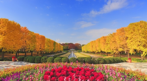 The 12 Top Spots for Autumn Colors in Japan