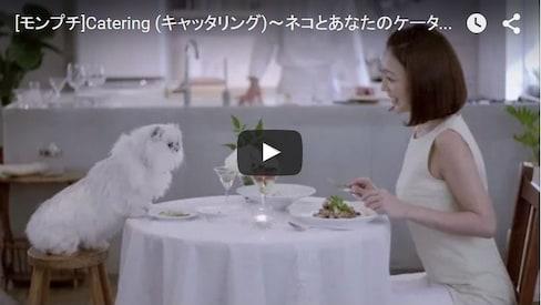 与自己的猫咪&狗狗玩伴一同用餐吧