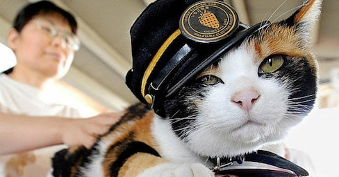 The Station Master Cats