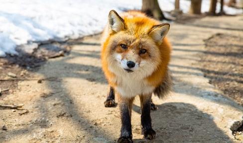4 ดินแดนของสัตว์ในญี่ปุ่น