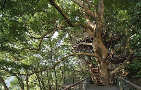 Treehouse Built Around 300-Year-Old Tree