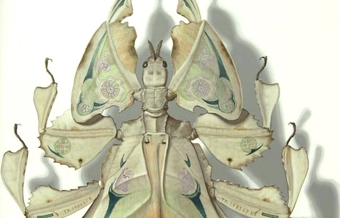 Painted Imaginary Camouflaged Leaf Insects
