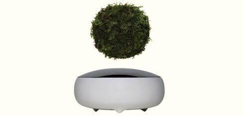 Surreal Levitating Air Bonsai Now Available