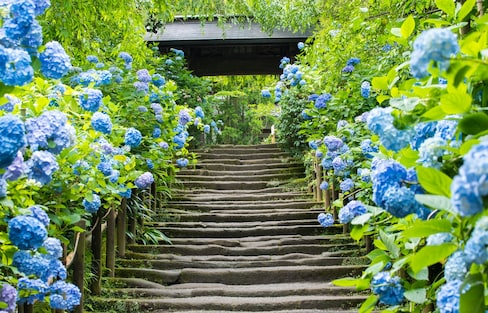 Feel the Flower Power at Meigetsu-in Temple