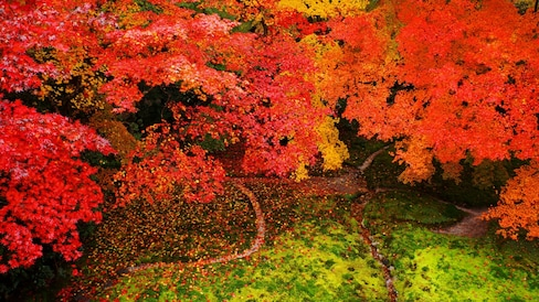 漫步瑠璃光院,目睹京都寺廟的獨特紅葉美景