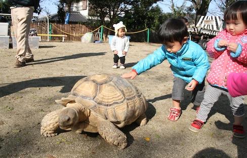 5 สวนสัตว์ที่สามารถเข้าไปเล่นกับสัตว์เล็กๆ ได้