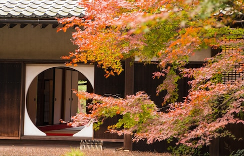Kamakura's Top 10 Fall Foliage Spots