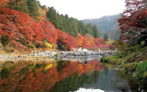 Top 3 Autumn Spots in the Tokai Area