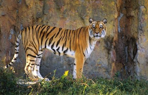 Top 10 Zoos in Japan