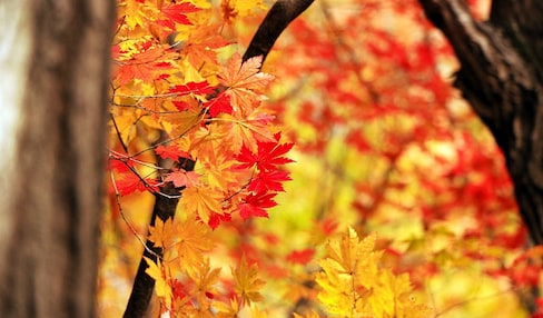Japan's Fabulous Fall Colors Guide by Month