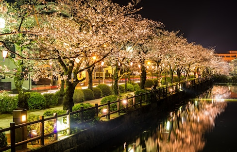 Top 10 'Hanami' Spots in Japan