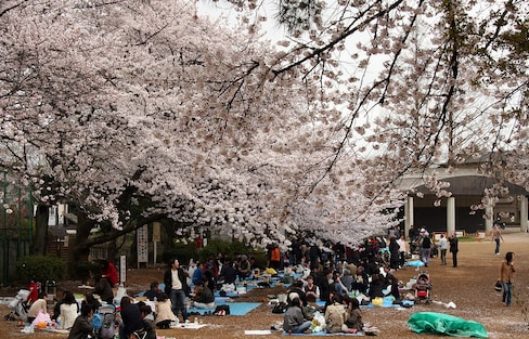 5 Blooming Places to Enjoy Hanami in Tokyo