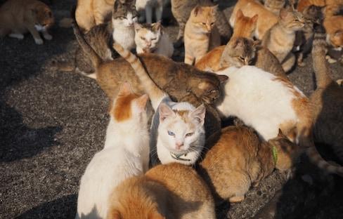 ลุยเดี่ยว เที่ยวเกาะแมว Aoshima Island