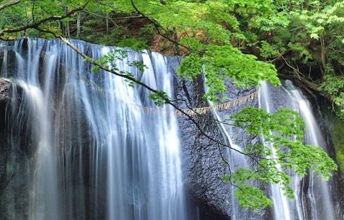 走一趟日本东北,发现盎然绿意的春日之旅