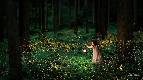 Fireflies Light up the Night in Amazing Photos