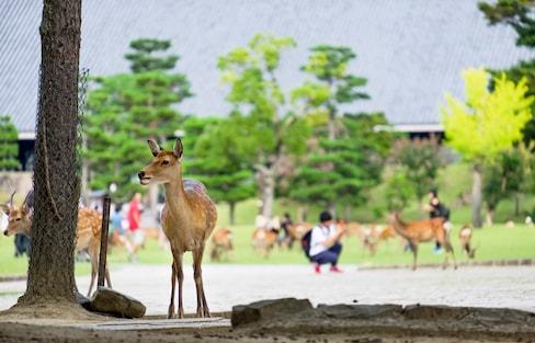 吃货党|逛完奈良公园,可别错过这些美食!