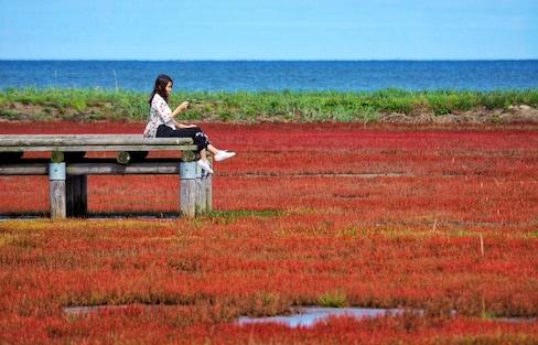 Unseen Hokkaido กับ ปะการังหญ้าสีแดงที่ Notoro