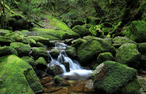 Top 5 Things to Do & See on Yakushima