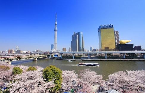 智游人 春天必访!日本东京赏樱名所及开花时间预测