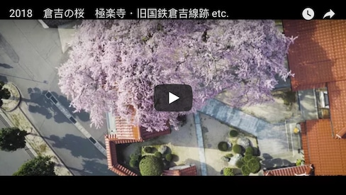 See Tottori Cherry Blossoms at their Best