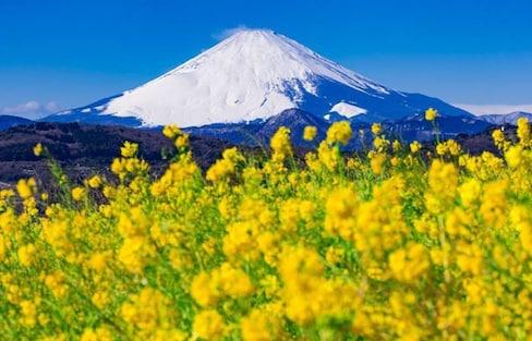 30 Spectacular Flower Spots in Japan