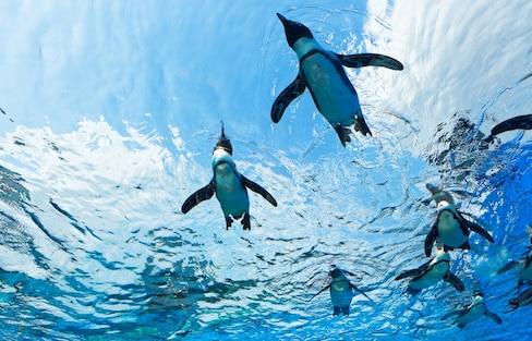 【日本東京】涼快過暑假!到水族館窺探海洋世界的秘密