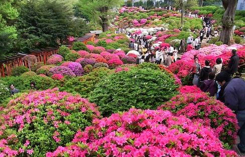 5 อันดับเทศกาลชมดอกไม้ญี่ปุ่นที่ห้ามพลาด!