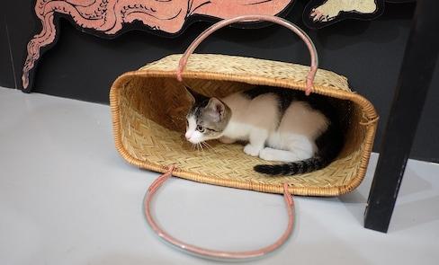 ทาสแมวห้ามพลาด! Event ตะลุยยุคเอโดะกับแมวน้อย