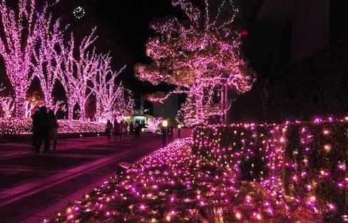 ชมงานประดับไฟ โรแมนติกสว่างไสวใจกลาง Shinjuku!
