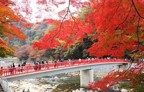 到京都賞楓還不夠!再訪日本一定要知道的東海三大楓紅秘境