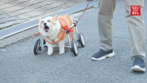 Wheelchairs for Dogs Rolling out in Osaka