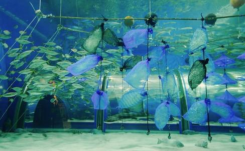 【青森】大手牽小手旅遊趣!窺探陸奧灣海洋文化孕育的「淺蟲溫泉鄉」