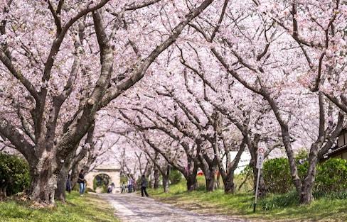 【佐賀】春之饗宴!元氣佐賀的5大賞櫻景點
