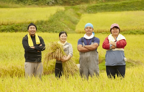 徹底解說!日本稻米的種類及購買指南