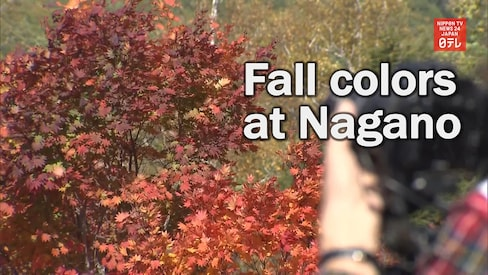 Fall Leaves Redder than Usual in Central Japan