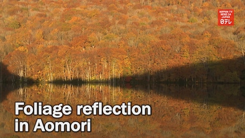 Hakkoda's Crystal Clear Foliage Reflection