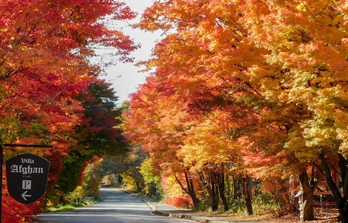 【日本山梨】秋日到八岳自駕賞紅葉拾秋栗