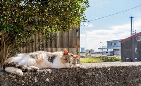 日本深度游:绝不能错过的治愈心灵之旅!日本猫岛你知道几个?