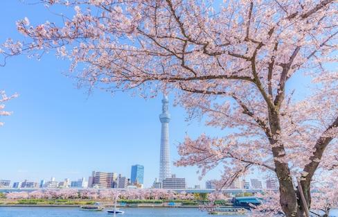 日本自由行:春天的极致浪漫——东京赏樱最强攻略!(建议收藏)