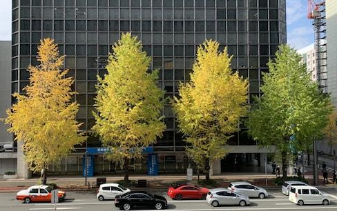 Discovering Fukuoka's Autumn Treasures